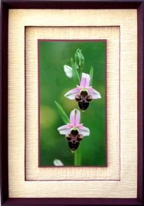 Encadrement photo couleur de deux orchidées passe-partout papier gaufré blanc cassé et biseaux droits prune